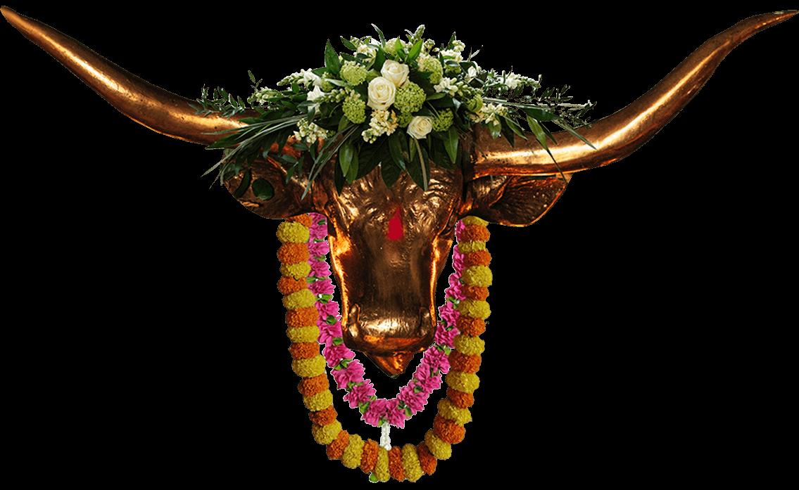 bull center