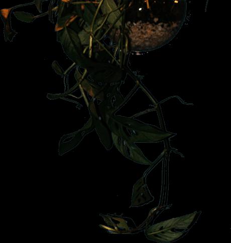 top plant